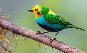 Con avistamiento y registro de aves, Barranquilla se une al 'October Big Day 2020'