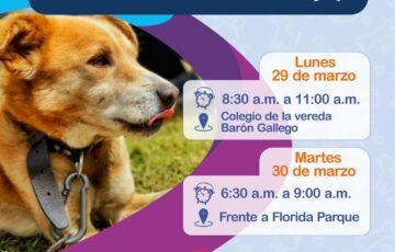 En Semana Santa continúa la gira de protección animal en Tunja