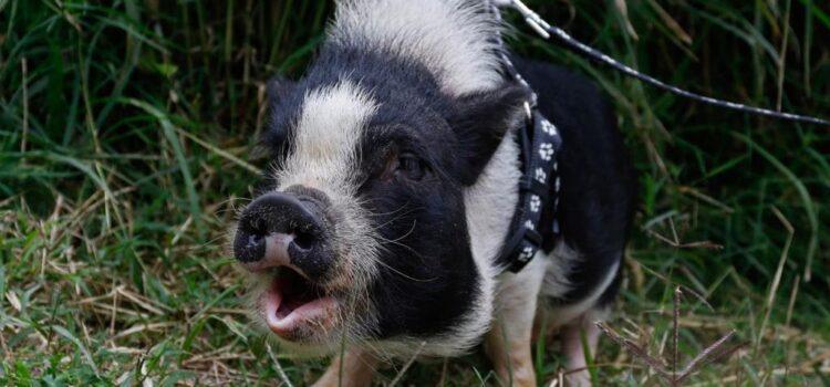 Más de 300 mascotas esperan por su adopción en la Unidad de Protección Animal en Manizales