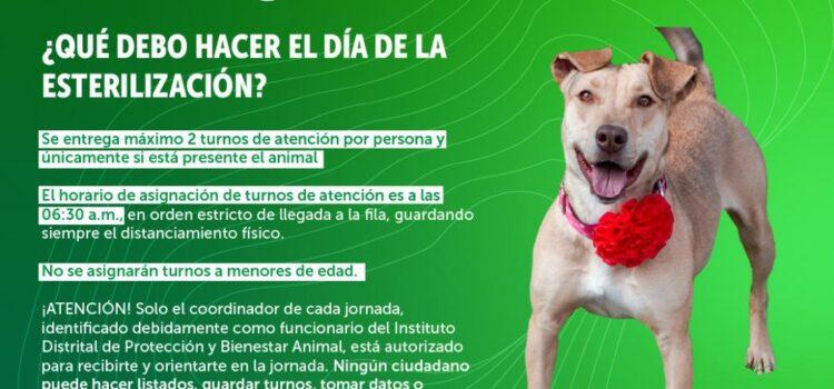 Volvieron las jornadas de esterilización para animales en Bogotá