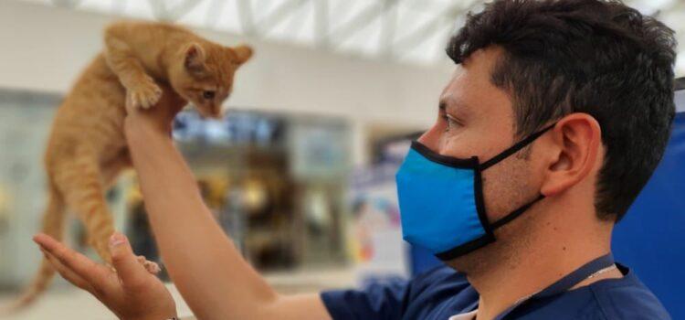 Avanza con éxito la estrategia 'La Protección Animal nos une' de la Alcaldía de Tunja