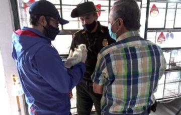 Alcaldía de Pasto realiza vigilancia y control a la venta de animales de compañía y ornamentales