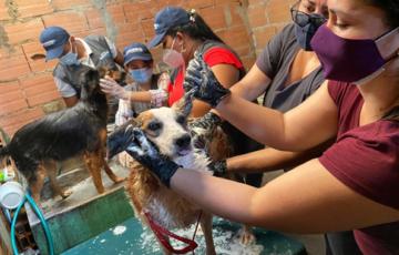 Refugios para animales de Villavicencio se benefician con la campaña 'los albergues cuentan contigo'