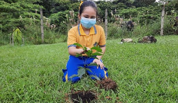 La Alcaldía de Villavicencio ha sembrado cerca de 120 mil árboles