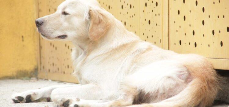 Secretaría de Salud y Ambiente de Bucaramanga ubica punto fijo de vacunación para caninos y felinos